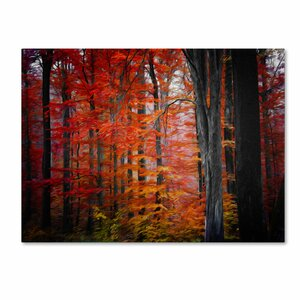 No Particular Title by Philippe Sainte-Laudy Photographic Print on Wrapped Canvas by Trademark Fine Art
