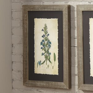 Verdure Framed Print I by Birch Lane™