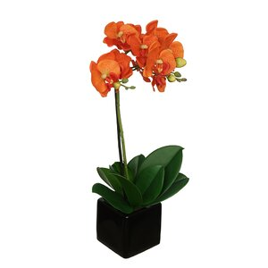 Artificial Baby Cube Ceramic Orchid Flowers in Pot (Set of 2)