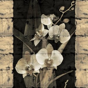 'Orchids in Bloom II' Graphic Art Print on Canvas by East Urban Home