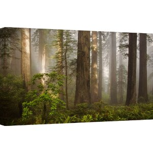 'Morning Light' Photographic Print on Canvas by Ashton Wall Décor LLC