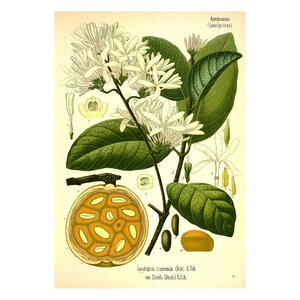 Vintage Botanical 'VII' by Julia Kearney Graphic Art Print by Evive Designs