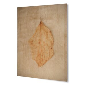 'Autumn Leaf ' Graphic Art on Plaque by KAVKA DESIGNS