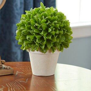 Kinsley Topiary Plant In Pot