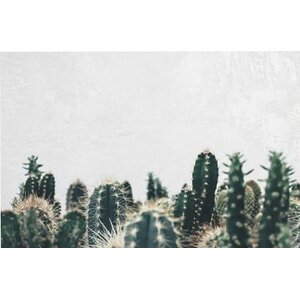 'Cactuses' Photographic Print on Wrapped Canvas by Mistana