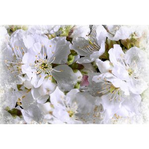 'Apricot Blossoms' by Sia Aryai Painting Print on Wrapped Canvas by Marmont Hill