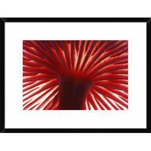 'Mushroom Detail of Underside Showing Gills' Framed Photographic Print by Global Gallery