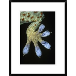 'Tokay Gecko Underside Detail of Foot with Scales That Have Natural Adhesive Properties' Framed Photographic Print by Global Gallery