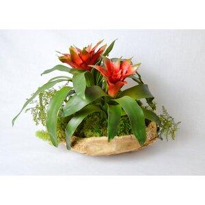 Exotic Bromeliad in Wood Bowl