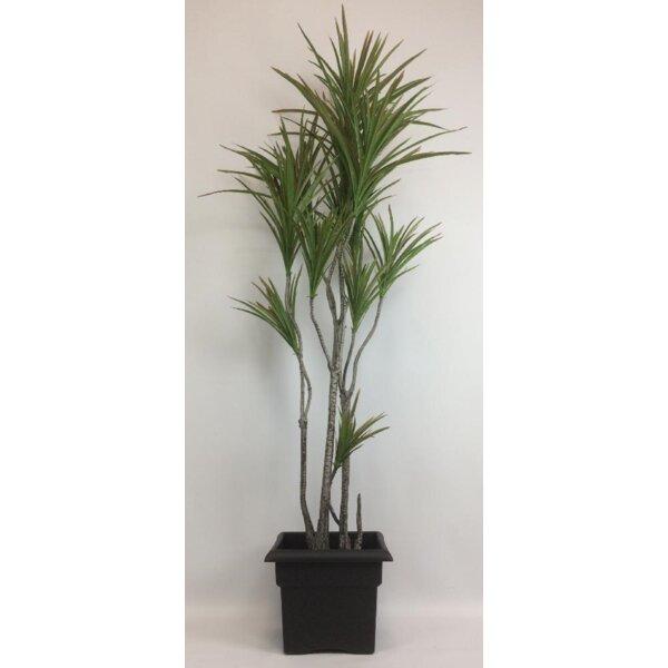 Bay Isle Home Artificial Dracaena Palm Tree In Planter Wayfair