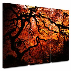 'Fire Breather - Japanese Tree' by John Black 3 Piece Photographic Print on Wrapped Canvas Set by ArtWall