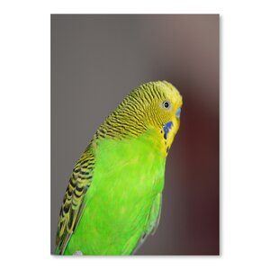 'Green Budgie Bird Parrot' Photographic Print by East Urban Home
