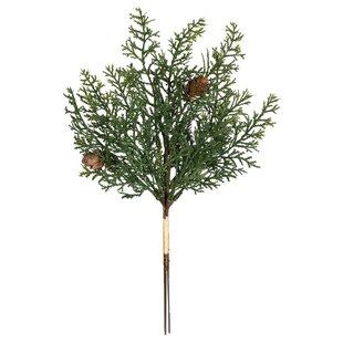 Cedar Stem