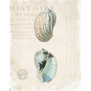 'Antique Shells' by Stacey Powell Graphic Art on Wrapped Canvas by Buy Art For Less