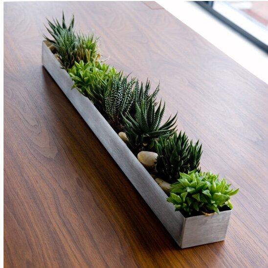 Window Box Planter Ideas: Gus Modern Stainless Steel Planter Box & Reviews