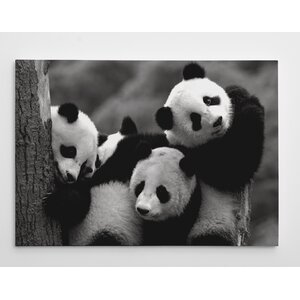 Pandas by Danita Delimont Photographic Print on Wrapped Canvas by Wexford Home