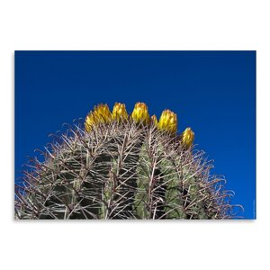 Barrel Cactus Photographic Print by Wrought Studio