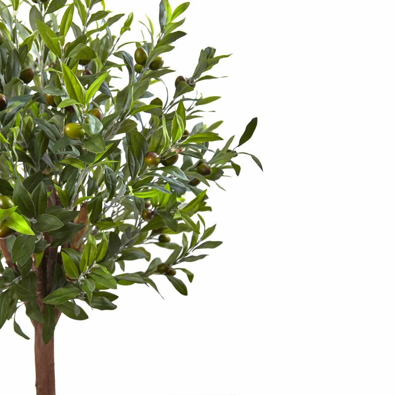 Nearly Natural Goodwin Olive Tree in Planter & Reviews | Wayfair