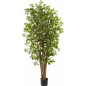 Floor Ficus Tree in Pot