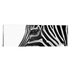 'Ignoring Zebra' Photographic Print on Canvas by East Urban Home