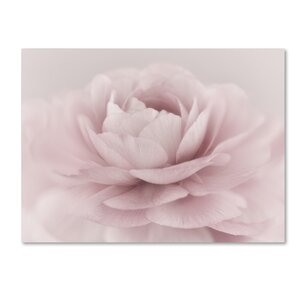 Stylisch Rose Pink by Cora Niele Photographic Print on Wrapped Canvas by Trademark Fine Art
