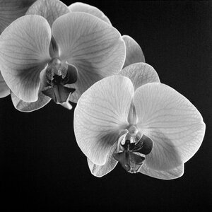Orchids by Michael Harrison Photographic Print on Wrapped Canvas by Trademark Fine Art