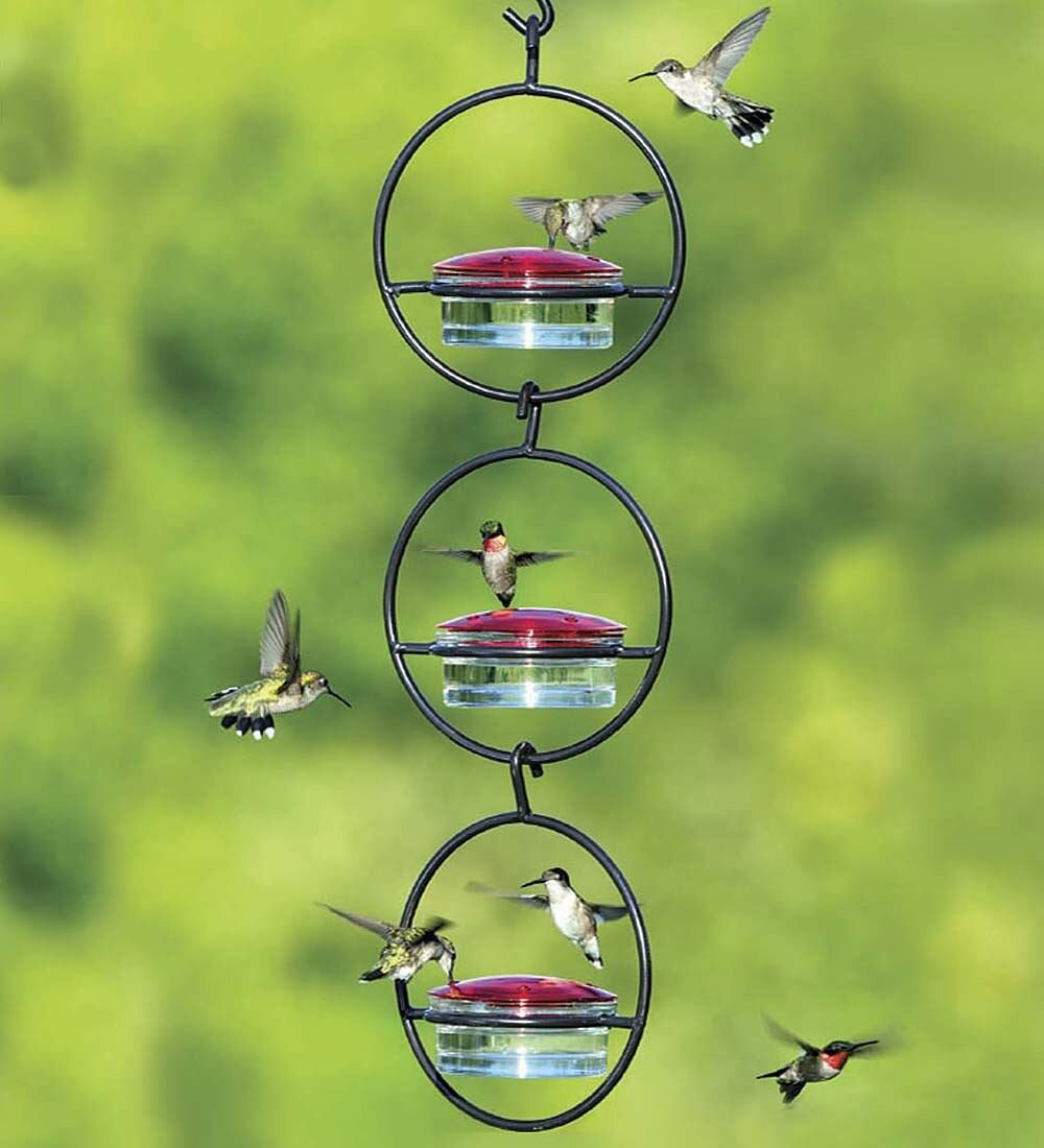 feeder s amazon outdoor com garden ounce perky pet favorite humingbird hummer dp hummingbird