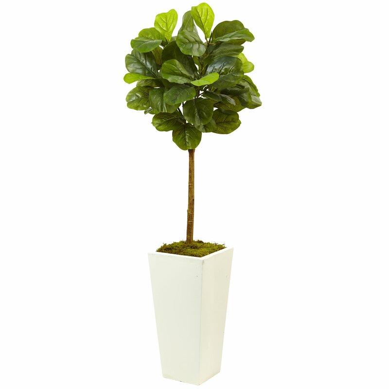 Fiddle Leaf Fig Plant In Planter Amp Reviews Joss Amp Main