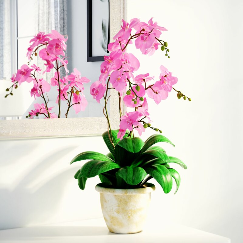 Alcott hill double phalaenopsis silk orchid flower reviews wayfair double phalaenopsis silk orchid flower mightylinksfo