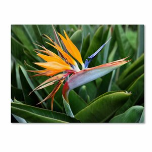'Bird of Paradise' by Pierre Leclerc Photographic Print on Canvas by Trademark Fine Art