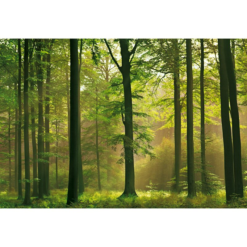 Latitude Run Euan Autumn Forest Wall Mural Reviews Wayfair