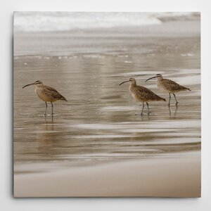 Premium 'Shore Birds I' by Danita Delimont Photographic Print on Wrapped Canvas by Wexford Home