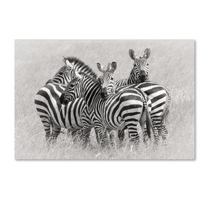 'Zebras' Photographic Print on Wrapped Canvas by Trademark Fine Art