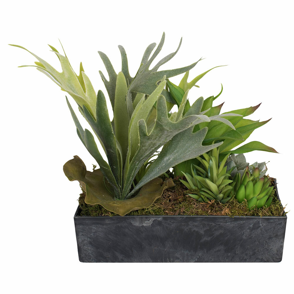Union Rustic Variety Agave Succulent In Planter Wayfair