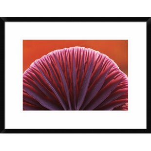 'Amythest Deceiver Detail of Gills on Underside' Framed Photographic Print by Global Gallery