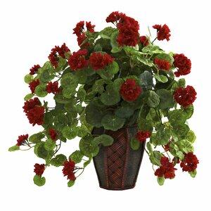 Geranium Desk Top Plant in Decorative Vase