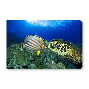 'Green Sea Turtle' Photographic Print on Wrapped Canvas by Art Remedy