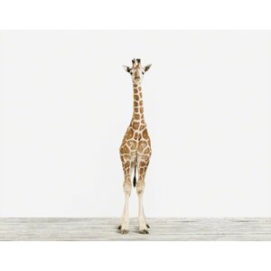 Baby Animals 'Baby Giraffe No.3' by Sharon Montrose  Photographic Print by The Animal Print Shop by Sharon Montrose