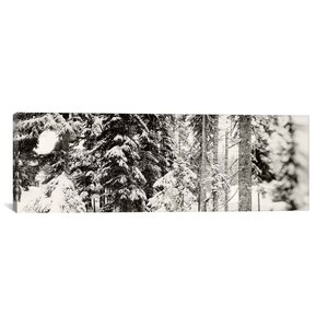 Panoramic Snow Covered Evergreen Trees at Stevens Pass, Washington State Photographic Print on Canvas in Black and White by iCanvas