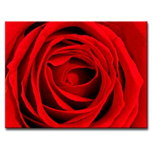 Abstract Rose Rouge by Bruce Bain Photographic Print on Wrapped Canvas by Ready2hangart