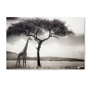 'Under The African Sun' Photographic Print on Wrapped Canvas by Trademark Fine Art