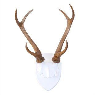 Search Results For Deer Antlers Wall Decor