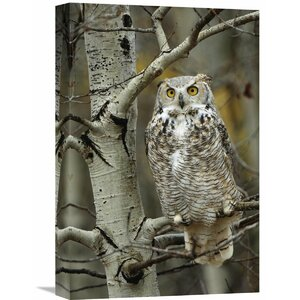 Nature Photographs Great Horned Owl pale Form Perched by Global Gallery