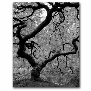 Japanese Tree II by David Farley Photographic Print on Canvas by Trademark Fine Art