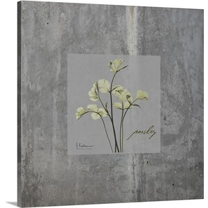 Concrete Parsley by Albert Koetsier Photographic Print on Canvas by Great Big Canvas