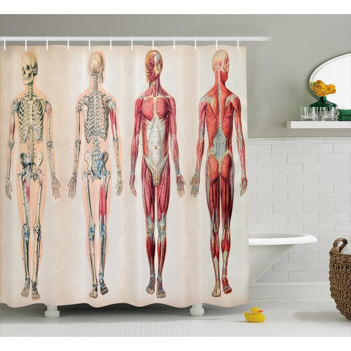 Human Anatomy Vintage Chart Of Body Front Back Skeleton And Muscle System  Bone Mass Graphic Shower