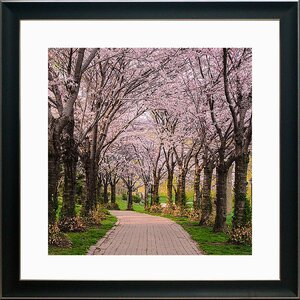 'Cherry Blossom Trail' Framed Photographic Print by Red Barrel Studio