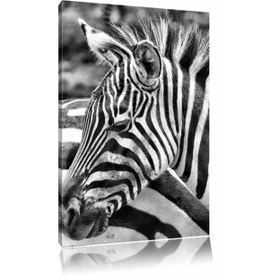 Majestic Zebra Wall Art On Canvas