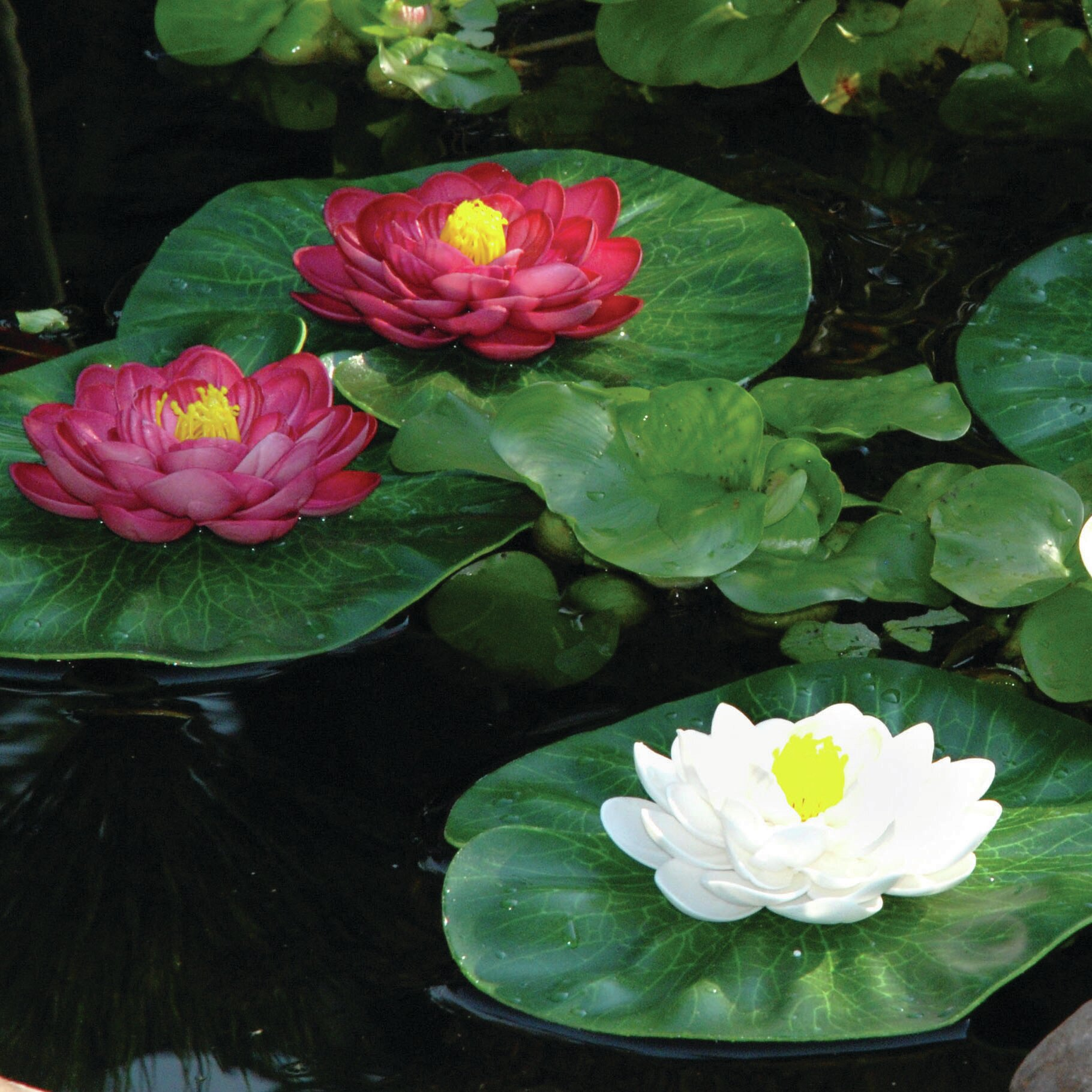 Pond Boss 3 Piece Floating Lily Pad Set Reviews Wayfair