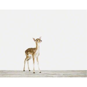 Baby Animals 'Baby Deer' by Sharon Montrose Photographic Print by The Animal Print Shop by Sharon Montrose